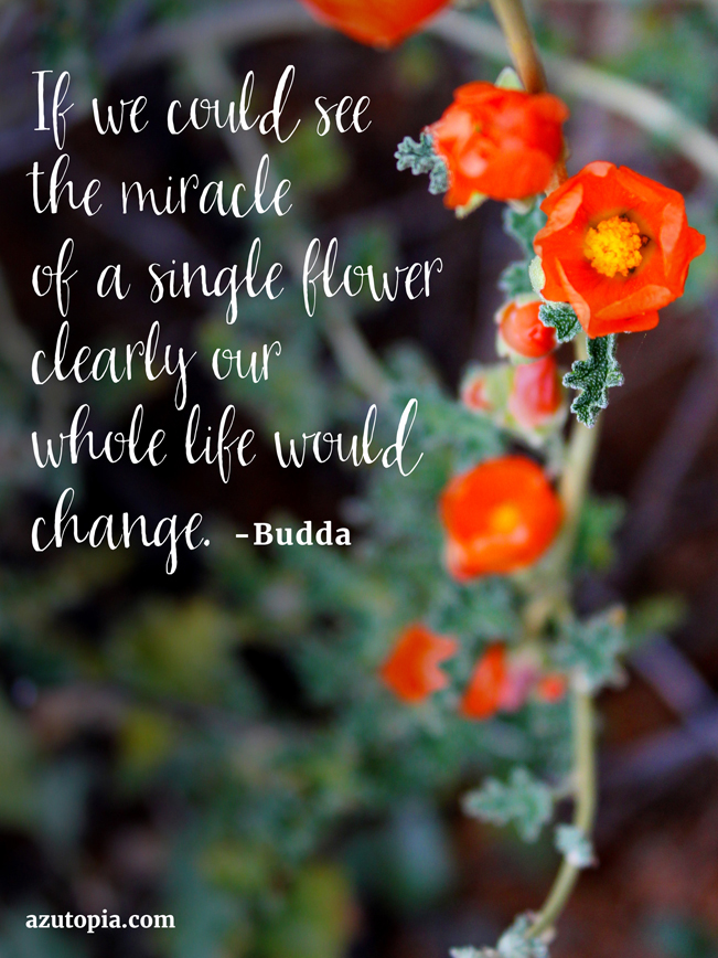 Good Afternoon Wallpaper With Quotes Inspiration From Budda Miracle Of A Single Flower