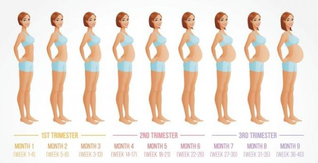 Deseti lunarni ili deveti kalendarski mesec trudnoće - Kalendar