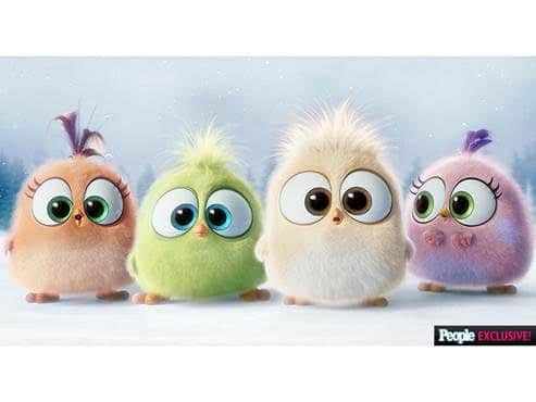 Cute Piggies Wallpaper Video Seasons Greetings From The Angry Birds Hatchlings