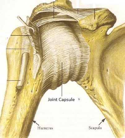 Shoulder and neck pain, the problem with joint capsules ...
