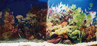 Fish Tank 3d Wallpaper Aquarium Background Stickers