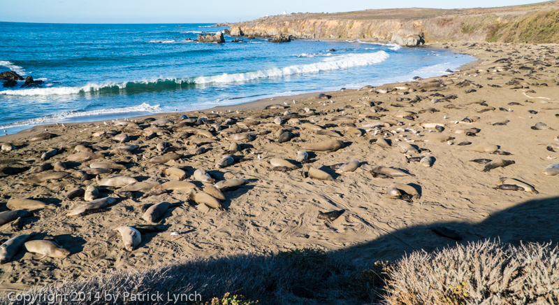 Elephant Seals,Elephant seal,Piedras Blancas,Sony