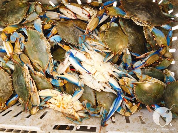 amy-shuster-crab-festival-tastemade-4