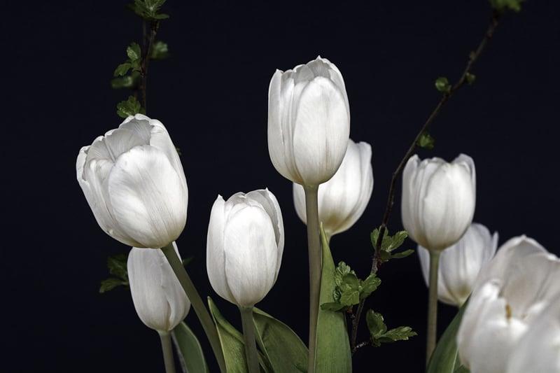 Girl Baby Shower Wallpaper 8 Tulip Varieties That Will Delight Your Senses