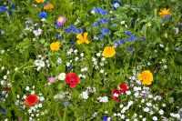 Backyard Flower Gardens Your Neighbors Will Envy