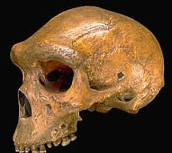 The Kabwe skull
