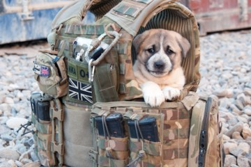 army puppy in a bag randomness