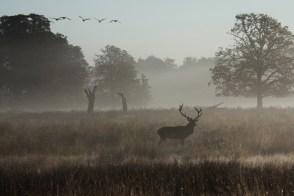 richmond-park-dawn