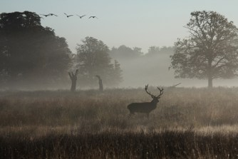richmond-park-dawn