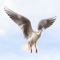 seabird_andywebb