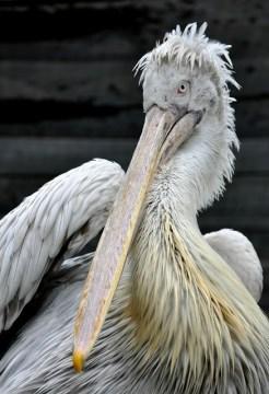 big bird - Hannah S