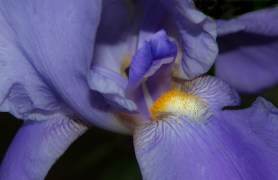 Purple Flower - Dave C