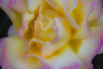 Yellow Flower - Dave C