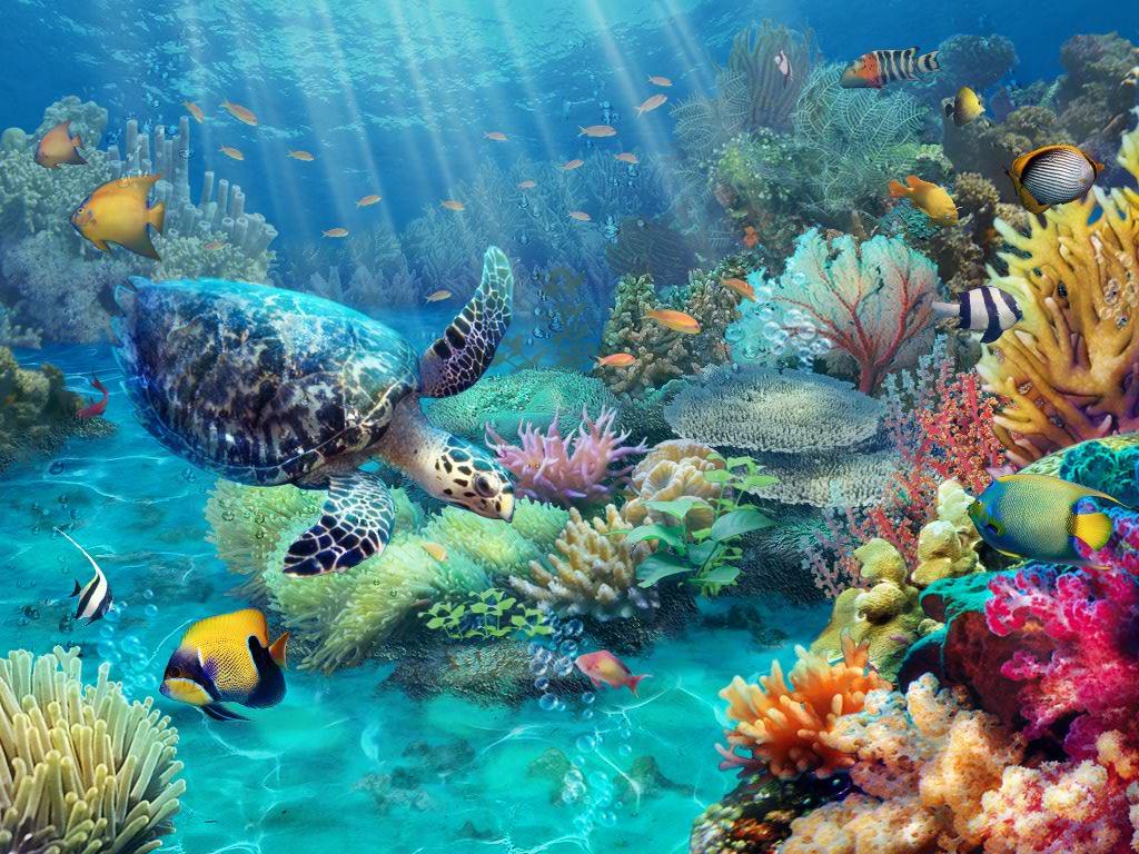 Underwater Iphone Wallpaper Sneak Peek Claire Hart Quot Tropical Truth Quot