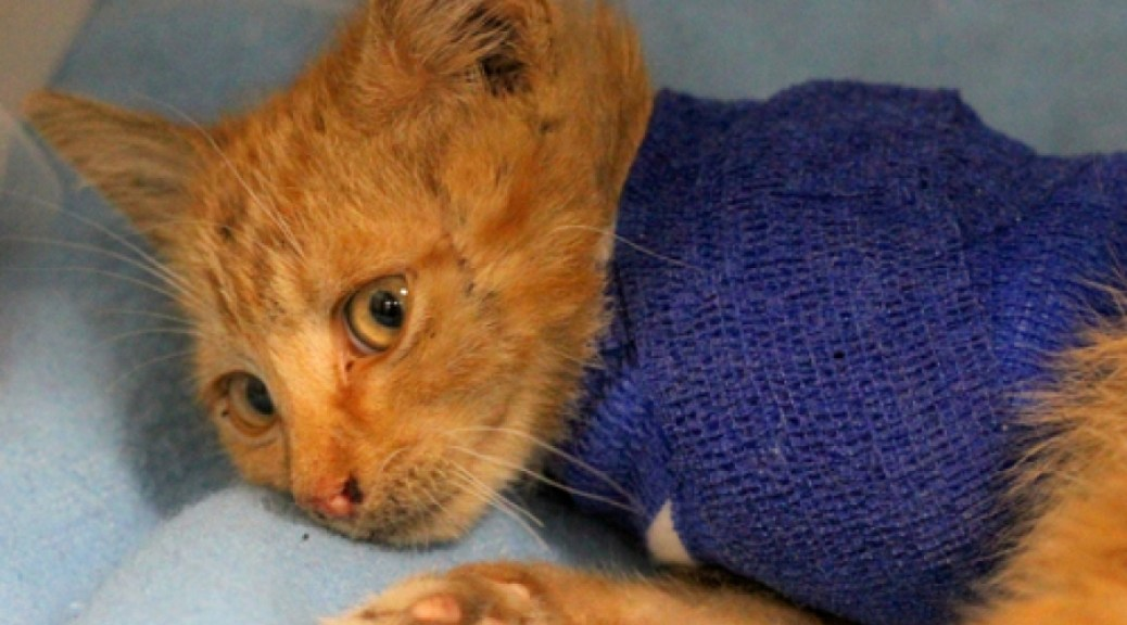 Victim of Animal Cruelty Surviving