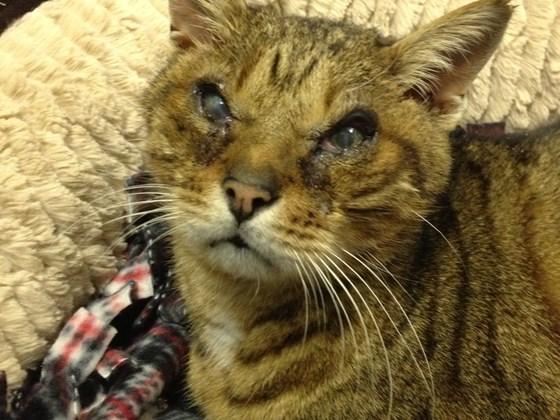 Cat Rescue Groups Help Como