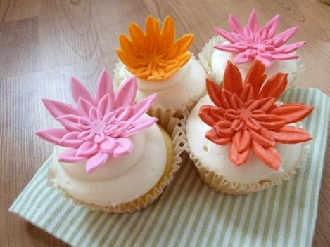 daisycupcakes