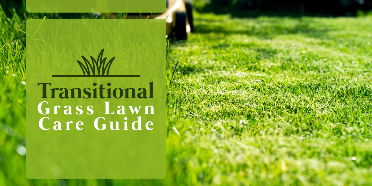 Lawn Care Guide for Transitional Grasses Caring for Transitional Grass