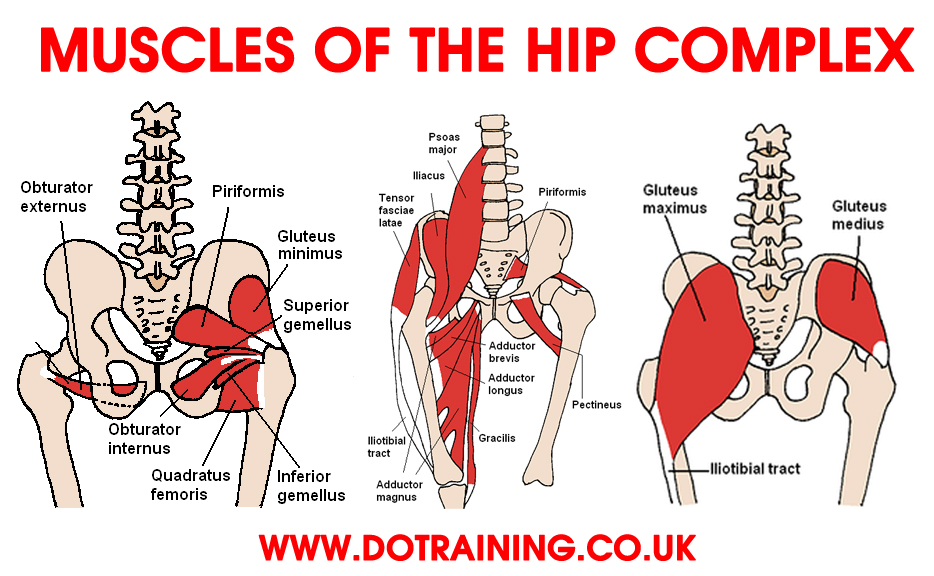 6 Steps to Correcting Hip Flexor Pain Balance In Motion