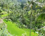 rice terrace, gunung kawi, bali, gianyar, temples, archaeological sites, places to visit