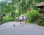 monkey forest, ubud, bali, village, ubud village, places, stay, places to stay
