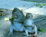 cute monkeys, sangeh, monkey, forest, bali, places, interest, sangeh monkey forest