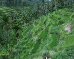 view, tegalalang, rice, terrace, ubud, bali, places, interest, tegalalang rice terrace, places of interest, bali places of interest