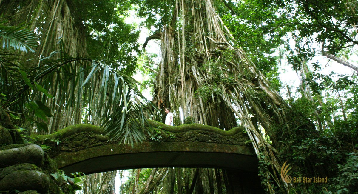Ubud Monkey Forest | Bali Places of Interest