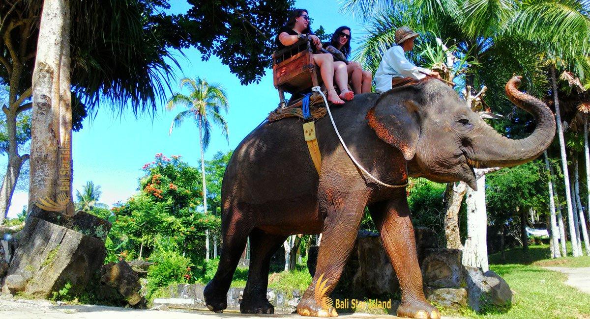 Elephant Ride Ubud Tours | Bali Tour Packages