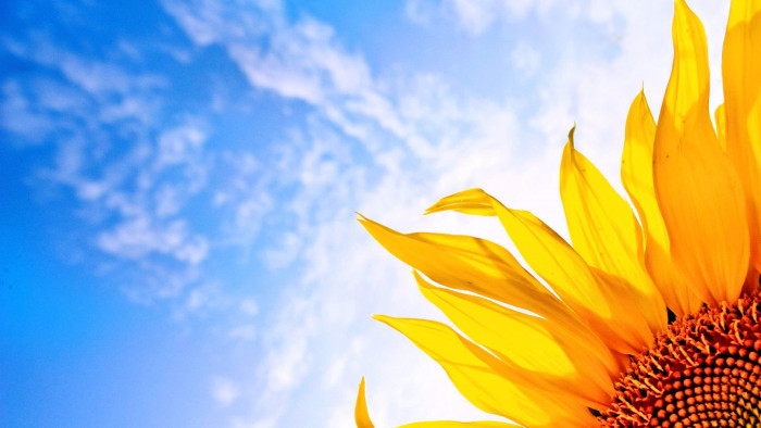 Download Free Funny Quotes Wallpapers Sunflower Sunrise Hd Desktop Wallpaper 23710 Baltana