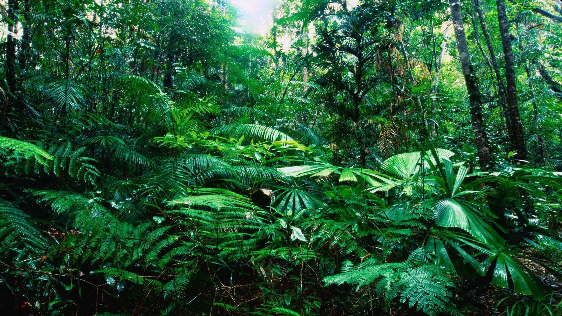 Free Animated Mobile Wallpapers Tropical Jungle Background Wallpapers 08532 Baltana