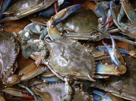 blue-crab