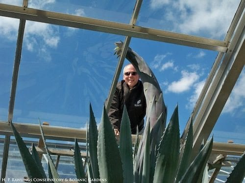 Staff members remove a glass panel to let the agave grow. Photo via the Rawlings Conservatory.