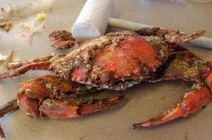 crab-300x199