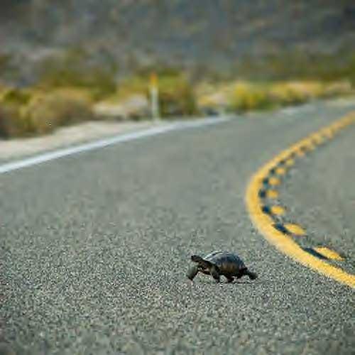 image via ecology.com