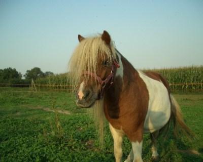 si fa trombare da un cavallo