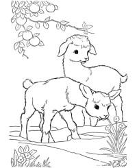 disegno caprette che saltano da colorare..disegno capre di ...