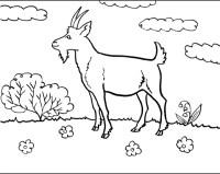 disegno capra da colorare,disegno pecora da colorare