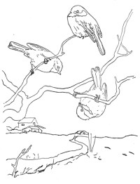 disegno uccelli da colorare..cincia da colorare