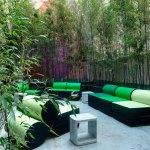 Bambusy w doniczkach na tarasie – ekran widokowy