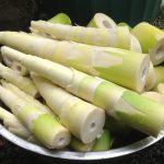Bambus jadalny – gatunki pyszne, smaczne i jadalne