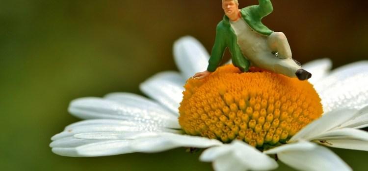 8 porad dla początkujących blogerów ogrodniczych