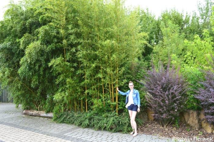 Bambusy w opolskim zoo