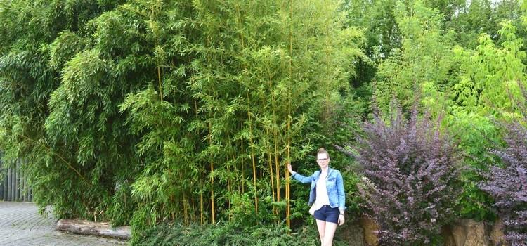 Bambusy w opolskim Zoo (2016)