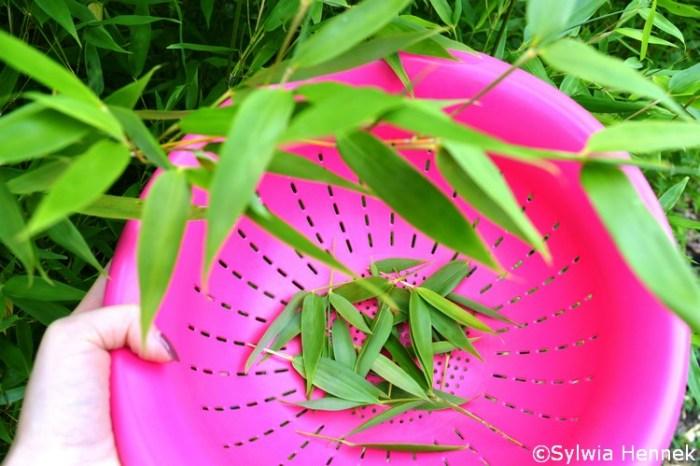 herbata z liści bambusa