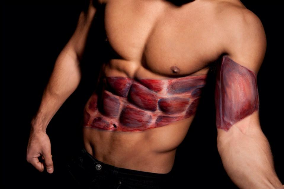 Muscle Anatomy: Torso – The Male Image |