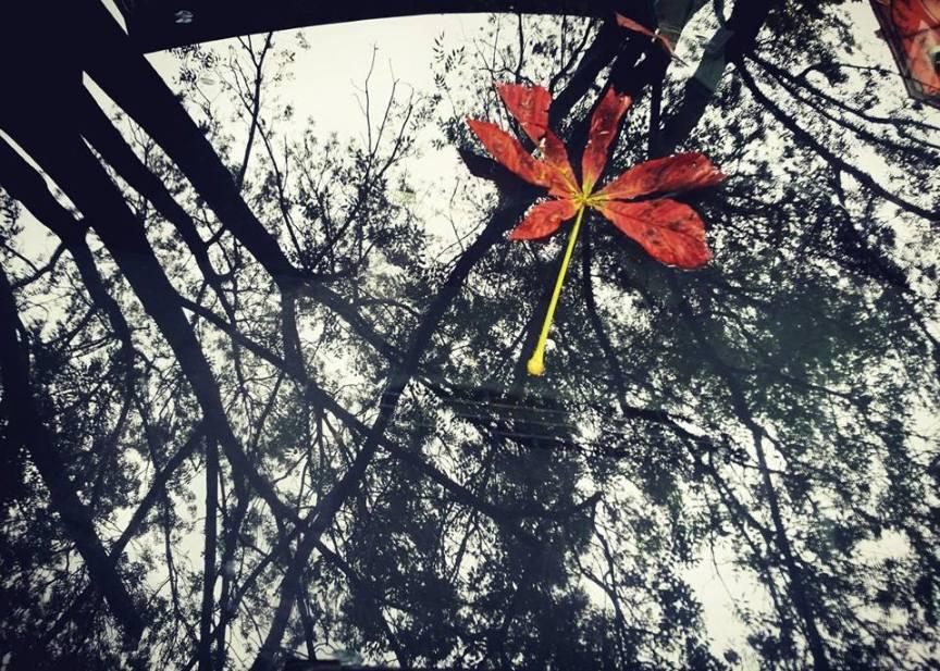 then the sky fell on Earth. снимка: Гергана Динева