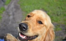 Amazon Banksia Park Puppy