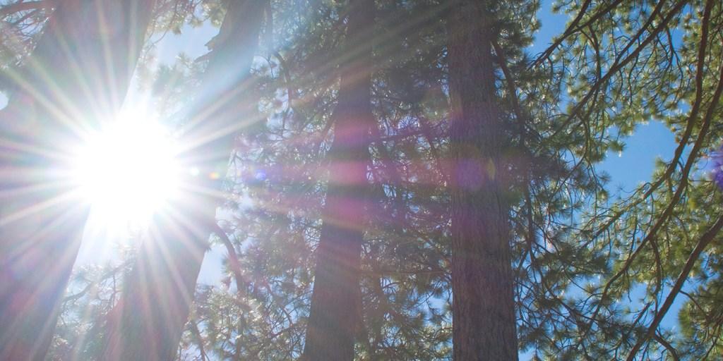 Lake Tahoe 2016 sunshine thru trees