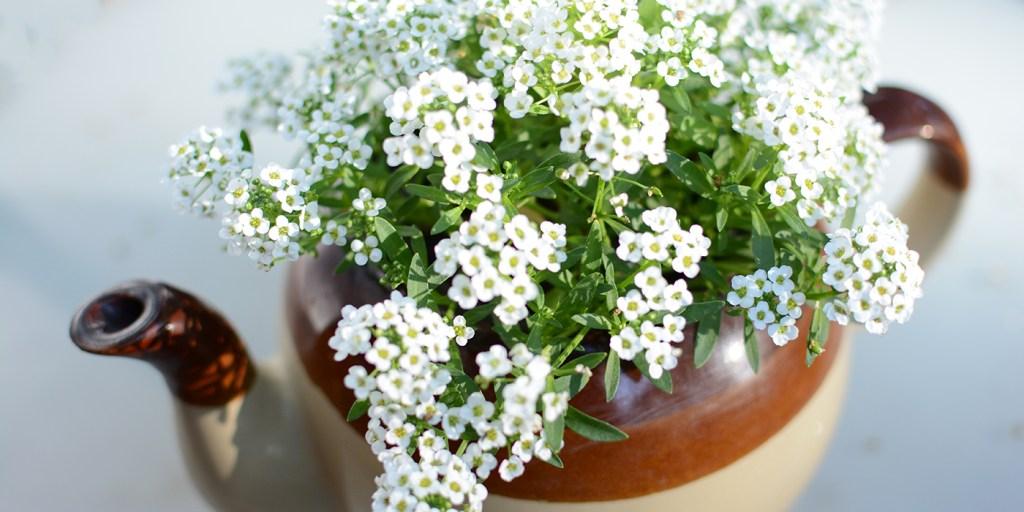 tea pot with flowers   Barb Ann Designs  